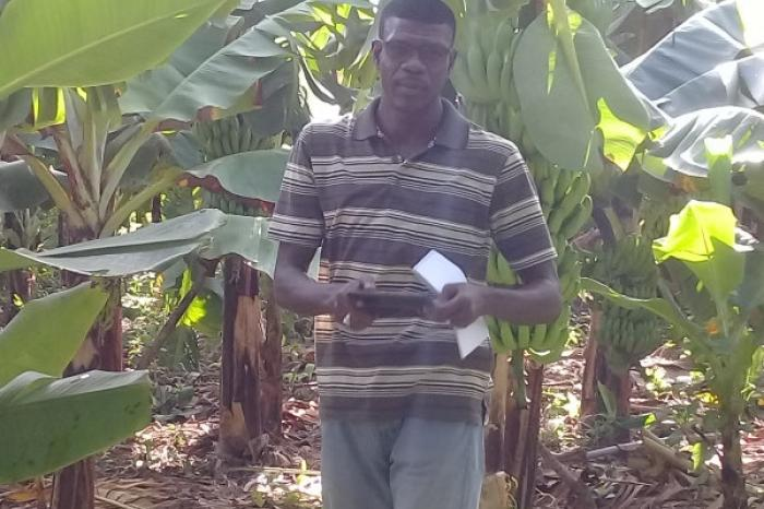The banana, a crop that can sustain its men… and women