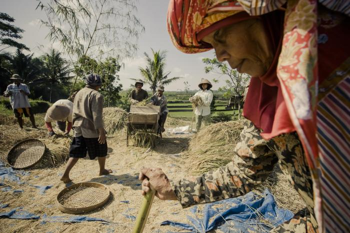 Food for Thought: Empowering farmers with premium rice