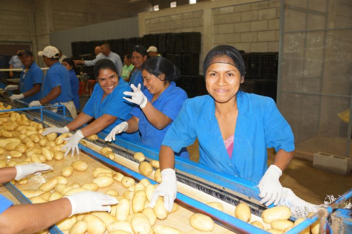 Sustainable and safe vegetable supply to Tegucigalpa, Honduras