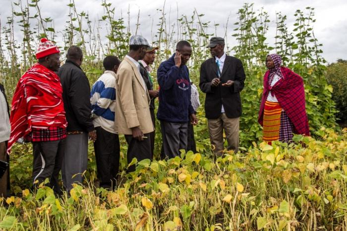 Farmers celebrate International Year of Pulses (IYP) 2016 in Tanzania
