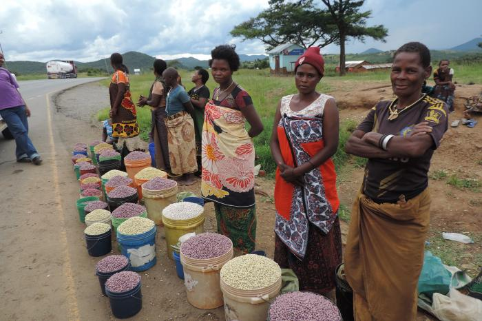 Rikolto's partnership with private sector on expanding pulses trade in and from Tanzania